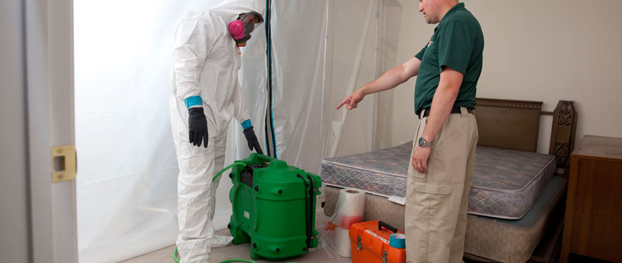 Grand Rapids, MN mold removal process